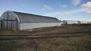 hoop house lating