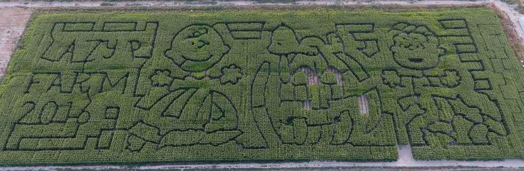 lazy-p-corn-maze