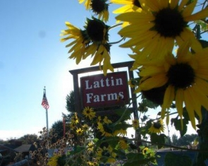 Lattin Farms, Fallon